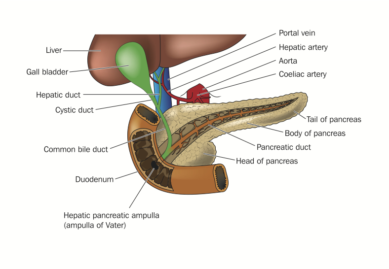 Pancreas Head