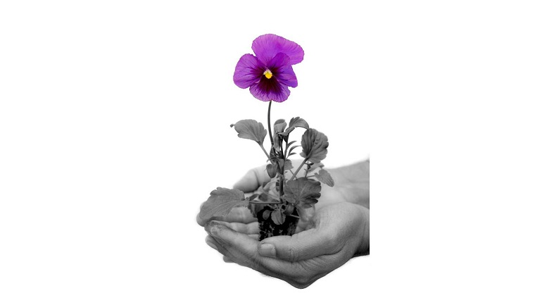 The Pansy Tribute Fund