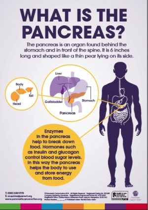 What is pancreas poster