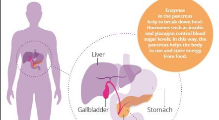 PCA 'what is the pancreas?' poster