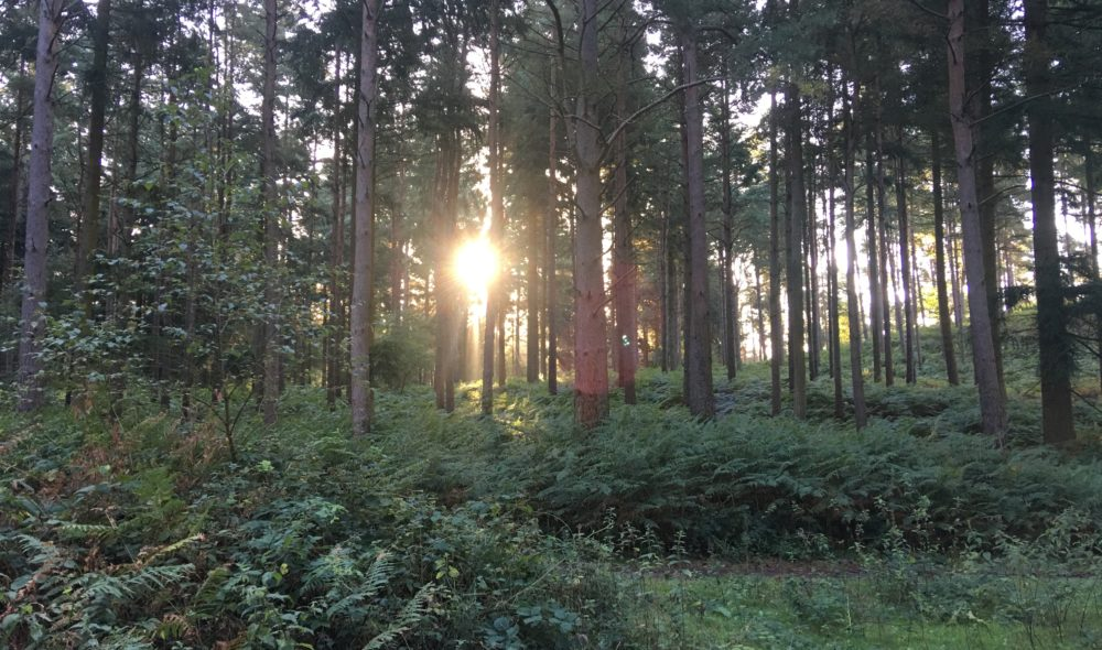 Lauren takes her route through the Longmoor Ranges where she gets to see some wonderful early-morning nature
