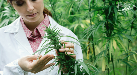 NEW RESEARCH: Medicinal cannabis could improve survival