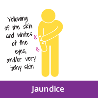 Jaundice symtpoms- yellowing of the skin and whites of the eyes, and/or very itchy skin